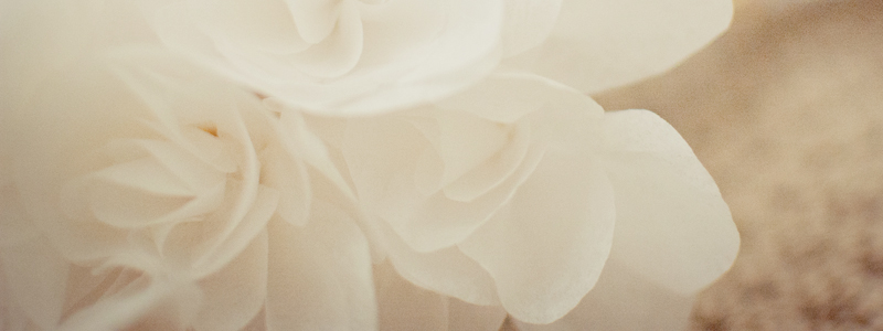 linnaxuphotography_bouquet_September232011_DSC_0083_header